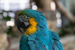 όμορφο macaw Στοκ εικόνα με δικαίωμα ελεύθερης χρήσης