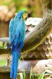 όμορφο macaw Στοκ Εικόνες