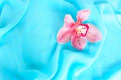 όμορφο orchid ροζ Στοκ Εικόνα