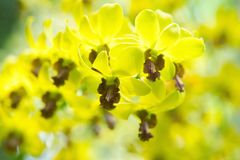 Όμορφο orchid στοκ εικόνες με δικαίωμα ελεύθερης χρήσης