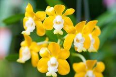 Όμορφο orchid Στοκ Φωτογραφία
