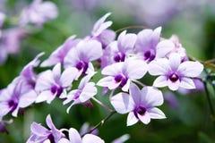 Όμορφο orchid Στοκ φωτογραφίες με δικαίωμα ελεύθερης χρήσης