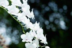 Όμορφο orchid στοκ φωτογραφίες