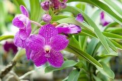 Όμορφο orchid Στοκ φωτογραφία με δικαίωμα ελεύθερης χρήσης