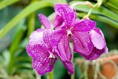Όμορφο orchid στοκ εικόνα