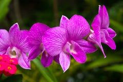 Όμορφο Orchid. Photorealistic Στοκ Εικόνες