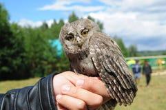 Όμορφο owlet Στοκ Φωτογραφία