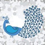 όμορφο peacock Στοκ εικόνες με δικαίωμα ελεύθερης χρήσης
