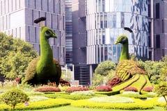 Όμορφο Peacocks φιαγμένο από χλόες Στοκ Εικόνα