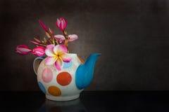 Όμορφο plumeria ή frangipani λουλουδιών teapot Στοκ Φωτογραφίες