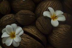 όμορφο plumeria Στοκ Φωτογραφίες