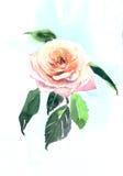 Όμορφο Rose Garden Στοκ φωτογραφία με δικαίωμα ελεύθερης χρήσης