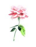 Όμορφο Rose Garden Στοκ φωτογραφίες με δικαίωμα ελεύθερης χρήσης