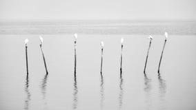 Όμορφο Seagull η παραλία Ταϊλάνδη Στοκ φωτογραφία με δικαίωμα ελεύθερης χρήσης