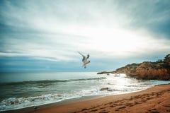 Όμορφο seagull πετά στα ύψη επάνω από τον ωκεανό και την παραλία στο ηλιοβασίλεμα, Στοκ Εικόνα