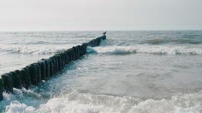 Όμορφο Seascape: Shag πουλί στο λούσιμο κυματοθραυστών στα κύματα θάλασσας κοντά στην ακτή απόθεμα βίντεο