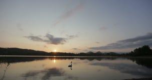 Όμορφο timelapse του ουρανού ανατολής επάνω από μια φυσική λίμνη Χρονικό σφάλμα ενός άσπρου κύκνου που πέρα από τη λίμνη στην ανα απόθεμα βίντεο