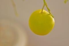 Όνειρα εσπεριδοειδών Στοκ φωτογραφία με δικαίωμα ελεύθερης χρήσης