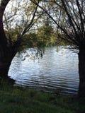 Όνειρα κάτω από τα δέντρα Στοκ Εικόνα