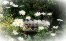 Όνειρα μαργαριτών στον κήπο με το λουτρό πουλιών Στοκ εικόνα με δικαίωμα ελεύθερης χρήσης