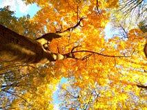 Όνειρα φθινοπώρου Στοκ εικόνα με δικαίωμα ελεύθερης χρήσης