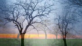 Όνειρο δέντρων - κολάζ των σκιαγραφιών δέντρων στοκ φωτογραφία με δικαίωμα ελεύθερης χρήσης