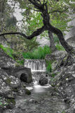 όνειρο πράσινο Στοκ Εικόνες