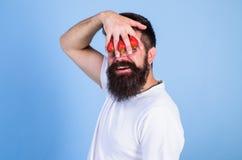 Όνειρο της φράουλας Το άτομο δεν μπορεί να δει τίποτα αλλά τη φράουλα μπλε υπόβαθρο Γενειοφόρο χέρι λαβής hipster ατόμων με στοκ φωτογραφία