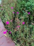 9 όνομα λουλουδιών AM Στοκ Φωτογραφίες