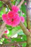 Όνομα τομέων ` λουλουδιών ` Linden, υπόβαθρο που θολώνεται Στοκ Εικόνες
