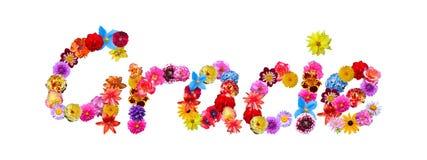 Όνομα Grace λουλουδιών Στοκ Εικόνες