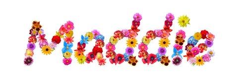 Όνομα Maddie λουλουδιών διανυσματική απεικόνιση