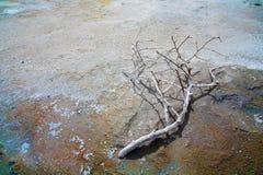 όξινο νεκρό έδαφος κλάδων Στοκ Φωτογραφίες