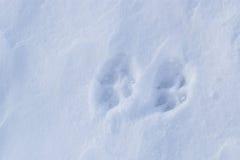 όπως η ανασκόπηση είναι μπορεί σβόλοι ιδιαίτεροι κάλυψε την επιφάνεια χιονιού ποσότητας σχεδιαστών χρησιμοποιούμενη Στοκ φωτογραφίες με δικαίωμα ελεύθερης χρήσης
