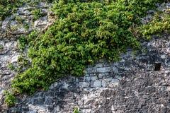 όπως η ανασκόπηση είναι μπορεί φρούριο να απεικονίσει το χρησιμοποιημένο τοίχο Στοκ Εικόνες