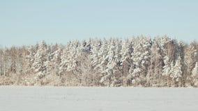 όπως η ανασκόπηση είναι μπορεί χρησιμοποιημένος θέμα χειμώνας απεικόνισης Τομέας και δάσος στο χιόνι στον ηλιόλουστο καιρό και το φιλμ μικρού μήκους