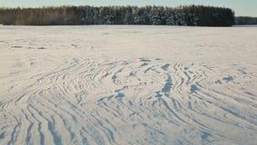 όπως η ανασκόπηση είναι μπορεί χρησιμοποιημένος θέμα χειμώνας απεικόνισης Τομέας και δάσος στο χιόνι στον ηλιόλουστο καιρό και το απόθεμα βίντεο