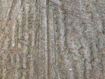 όπως ο φλοιός ανασκόπησης είναι μπορεί δέντρο χρησιμοποιούμενο Στοκ φωτογραφία με δικαίωμα ελεύθερης χρήσης