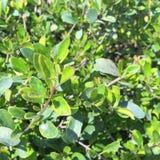 Όργανο φυτού, leafage, χρωματικό, φύλλο Στοκ Φωτογραφίες