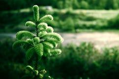Όρεγκον πράσινο Στοκ Εικόνες