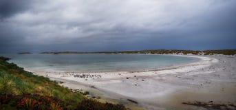 Όρμος τσιγγάνων, Νήσοι Φώκλαντ Στοκ Εικόνες