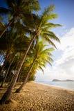 Όρμος Beachfront φοινικών Στοκ φωτογραφία με δικαίωμα ελεύθερης χρήσης