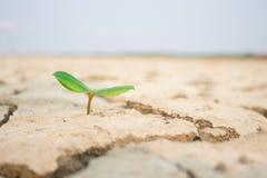 Όροι ξηρασίας μετενσάρκωσης δέντρων στοκ εικόνες με δικαίωμα ελεύθερης χρήσης