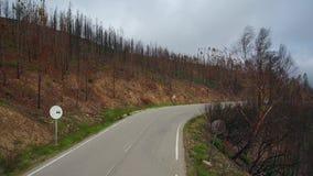 _ Όρος των δασών και των δέντρων μετά από τις πυρκαγιές σε Monchique Πορτογαλία απόθεμα βίντεο