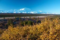 Όρος McKinley με τον κίτρινο θάμνο Στοκ Φωτογραφία