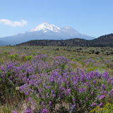 Όρος Shasta και Shastina Στοκ εικόνες με δικαίωμα ελεύθερης χρήσης