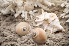 όστρακο Στοκ εικόνα με δικαίωμα ελεύθερης χρήσης