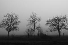 Όταν η ομίχλη έρχεται Στοκ Φωτογραφίες