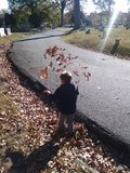 Όταν τα φύλλα επιτίθενται Στοκ Εικόνα