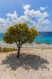 λόφος ένα δέντρο Στοκ Φωτογραφίες